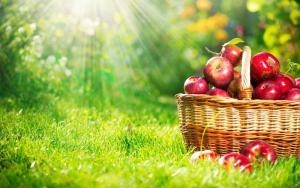 Третейский суд поможет садоводам